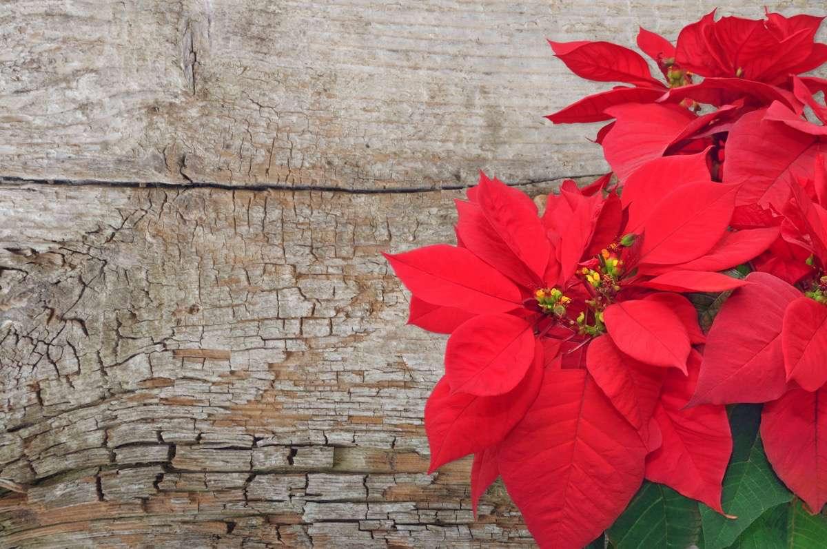 flor de pascua DIY