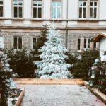 Villancico: Navidad, Navidad 7