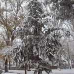 Nieve en Herencia 2