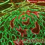 Interior árbol de Navidad luces Madrid