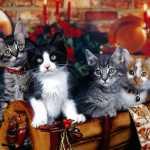 christmas-kittens1