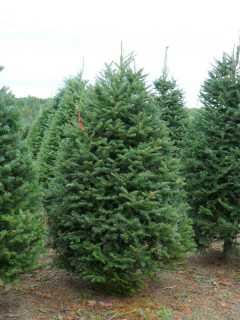 Historia del árbol de Navidad 5