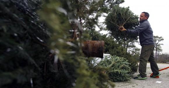 reciclar árbol de navidad
