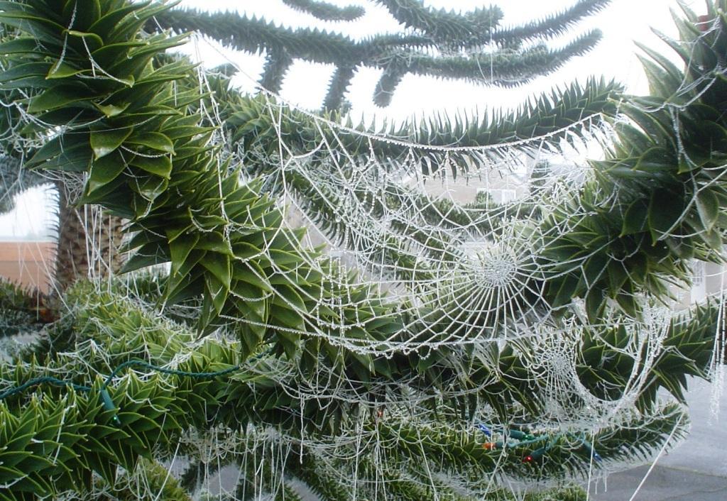 rituales navideños - tela de arañas en ucrania