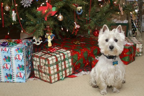 Angustia en la Navidad