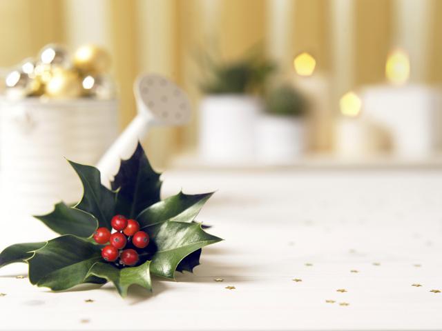 muérdago de Navidad - cualidades