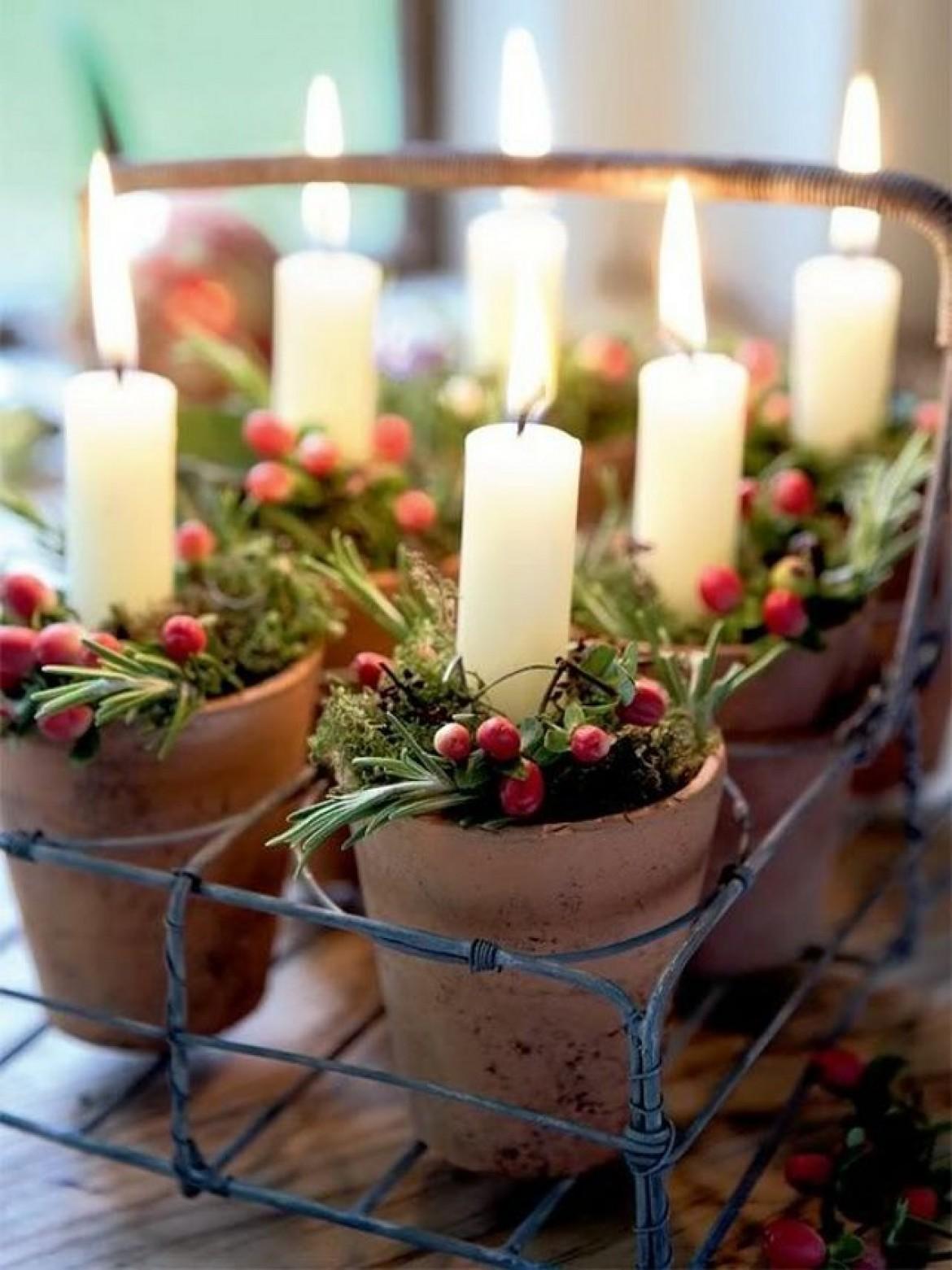 plantas para Navidad- acebo