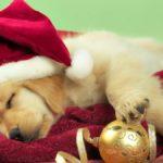 cuentos de Navidad cortos - El perrito