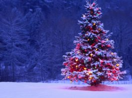 cuentos de Navidad cortos - El arbolito de Navidad
