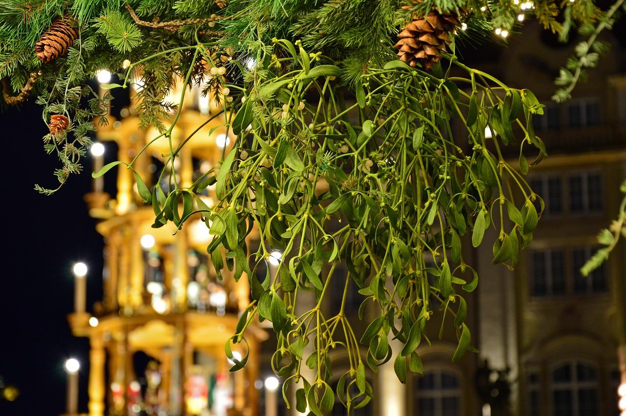 10 plantas típicas de Navidad para adornar nuestro hogar 2