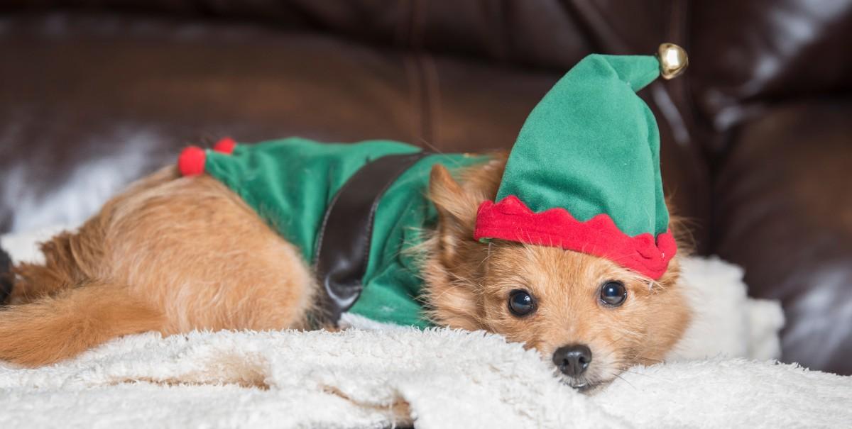 7 cuentos de Navidad cortos para contar a los peques 5