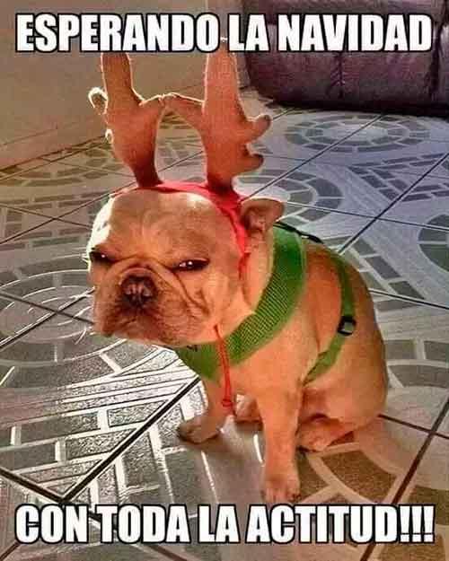 Las imágenes más graciosas para felicitar la Navidad y el Año Nuevo 26