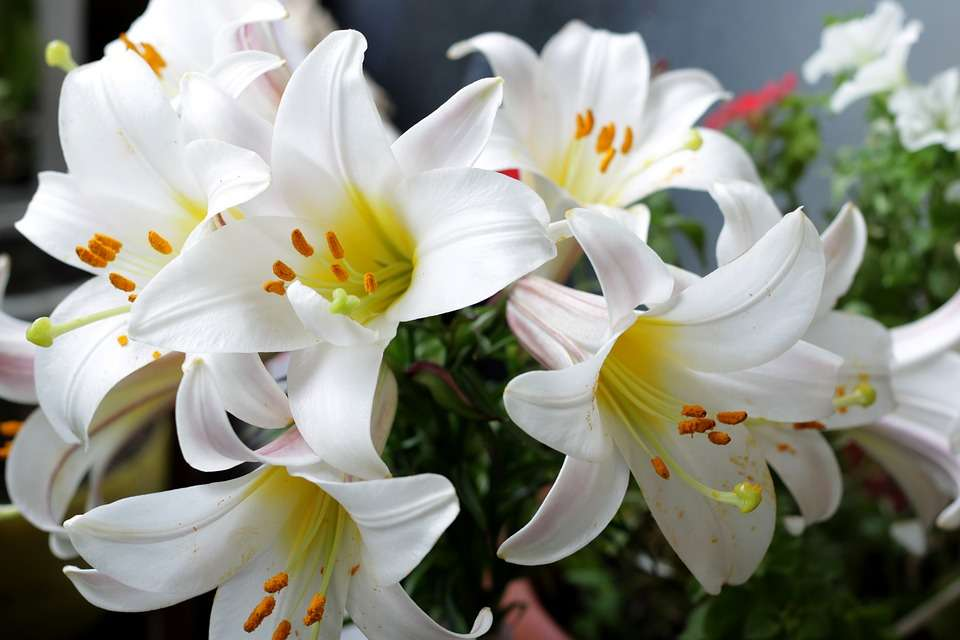 Flores, un regalo especial para esta Navidad 5