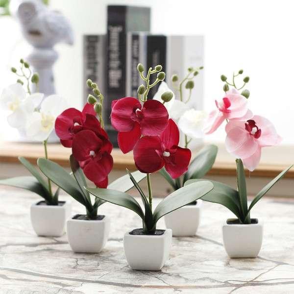 Flores para Navidad - Orquídeas