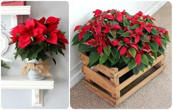 celebrar la Navidad con plantas