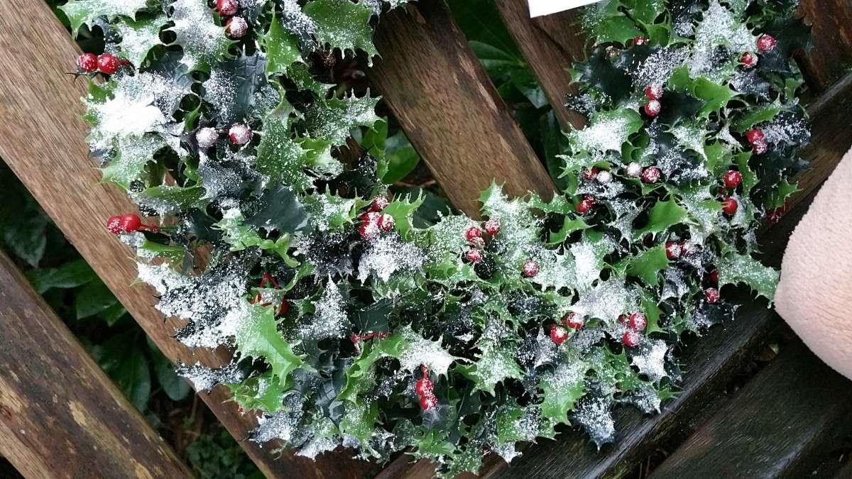 Historia y significado de las plantas navideñas 2