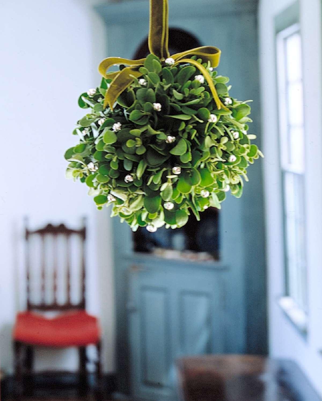 Historia y significado de las plantas navideñas 1