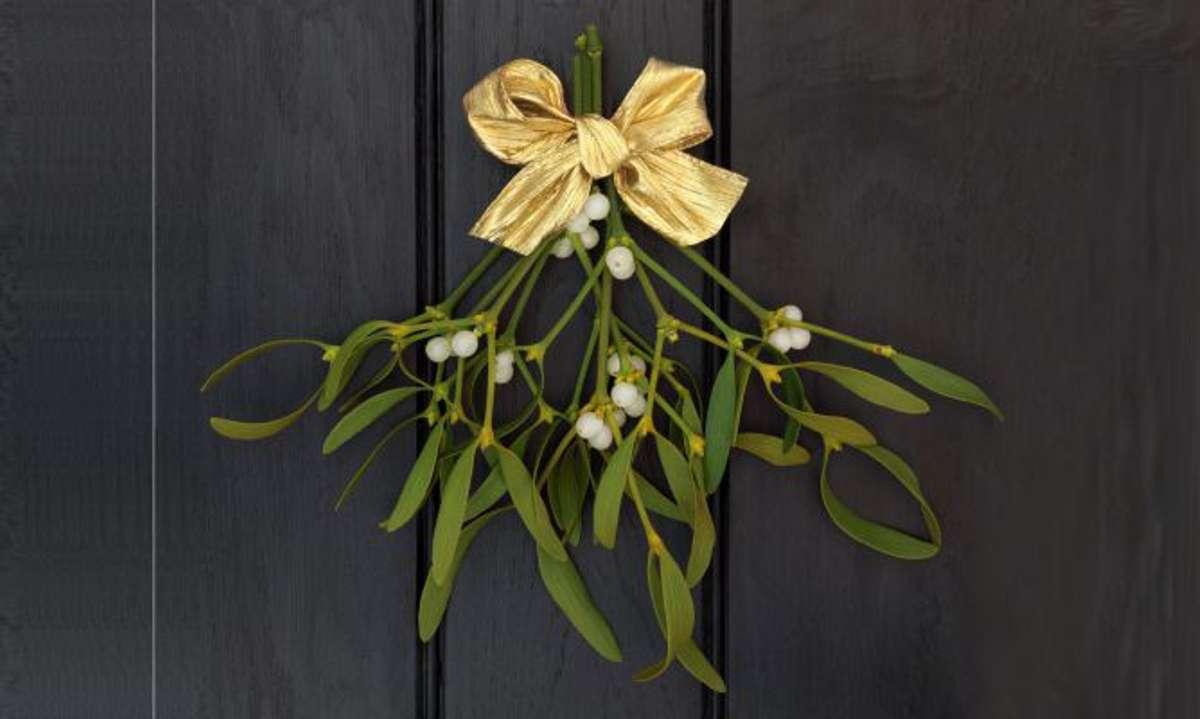 Historia y significado de las plantas navideñas 5