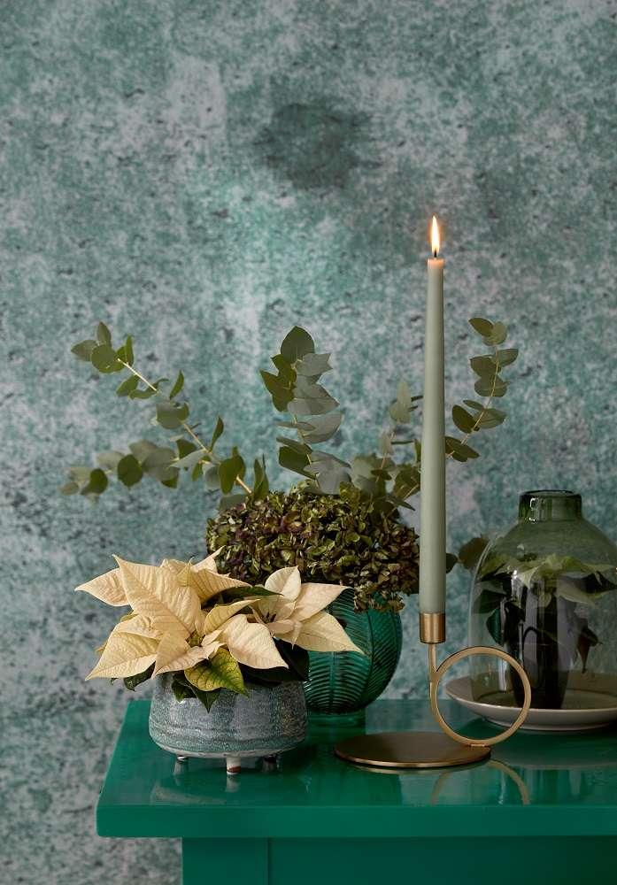 Ideas para crear un paraíso de plantas coloridas con poinsettias 10