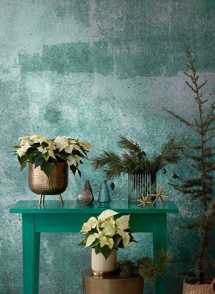 Ideas para crear un paraíso de plantas coloridas con poinsettias 11